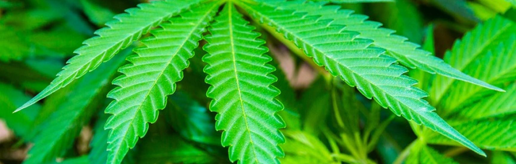 Provinces Begin to Set Framework for Marijuana Legalization